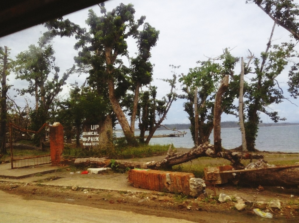 wrecked UPVTC Botanical Garden in Tacloban City after typhoon Yolanda